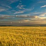 Мақал-мәтелдер — Пословицы: Туған жер туралы – О родной земле