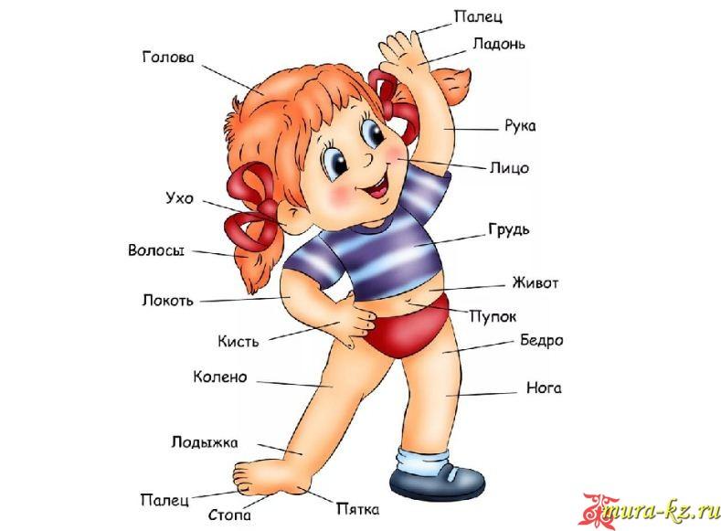 Загадки на казахском языке про человека и его части тела