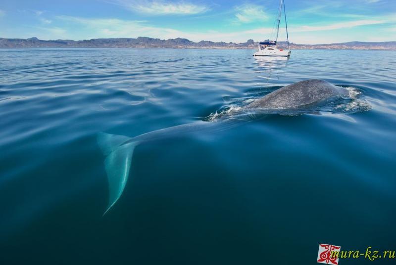 Жұмбақтар - загадки на казахском языке. Балыктар - рыбы, киты