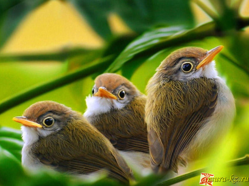 Жұмбақтар — загадки на казахском языке. Құстар — Птицы